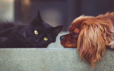 Das Haustier – bester Kumpel!