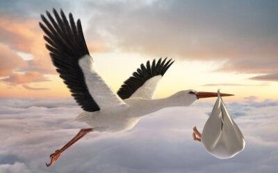 Was tun, wenn der Storch streikt?