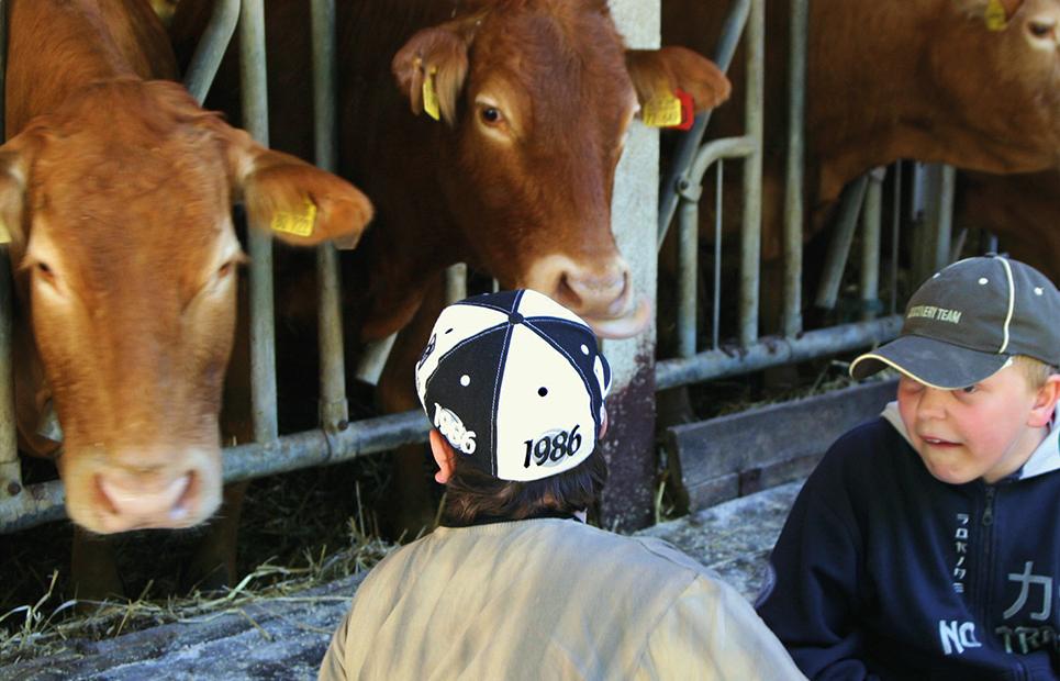 Zwei Jungen vor einem Kuhstall mit zwei braunen Kühen